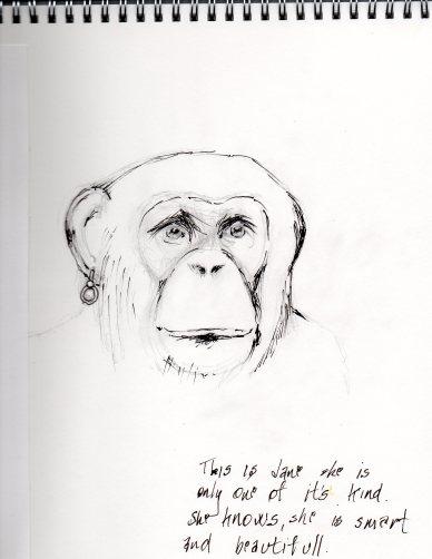 ape 1134